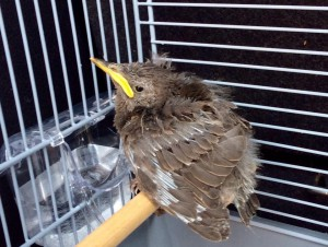 Baby bird1
